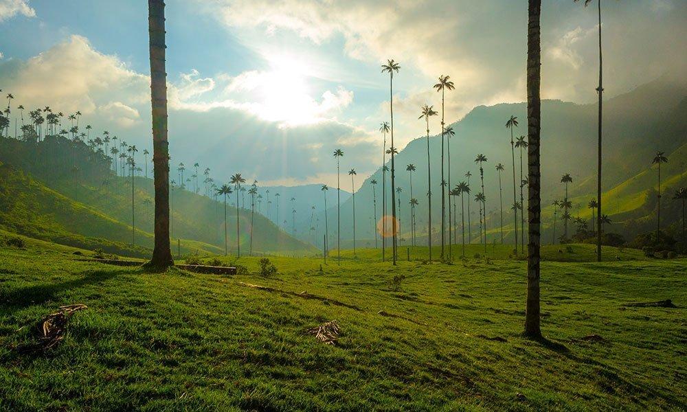 Colombia Valle del Cocora al atardecer